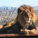 Drive to Out of Africa Wildlife Park